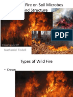 Fire and Its Effects on Soil