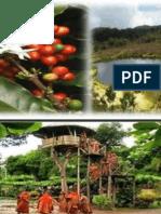 Perfil Selva Central