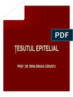 Curs Epitelial