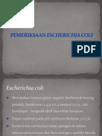 Ppt Pemeriksaan e. Coli