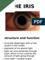 Iris - Visual Cortex