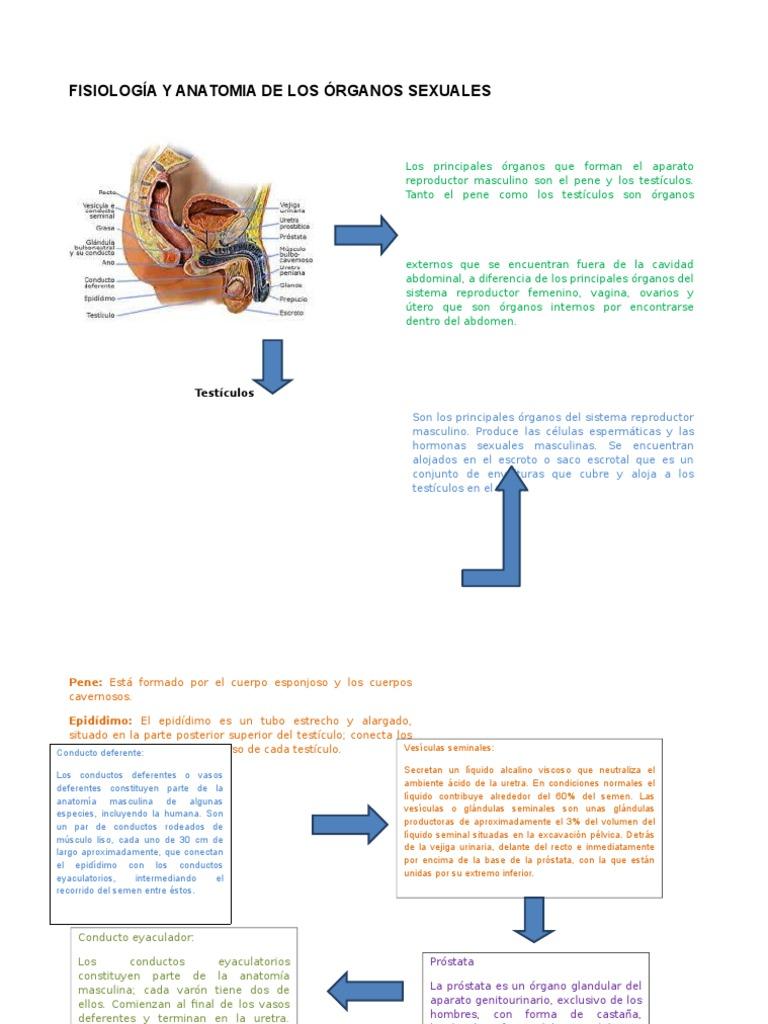 Fisiología y Anatomia de Los Órganos Sexuales 1