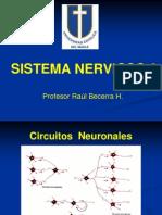 Sistema Nervioso 2 2013