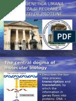Sinteza Proteinelor La Eucariote
