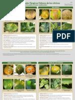 Emfermedades Fungicas en Citrus