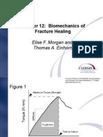 Biomechanics of Fracture Healing