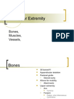 NP Upper Extremity Grays