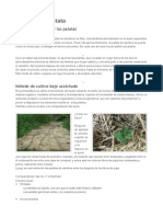 cultivo patatas permacultura