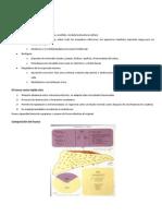 420-2014-03-28-01 Fisiopatologia osea.pdf