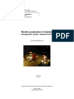 Broiler Production in Zambia