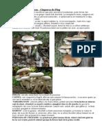 175688941-Ciuperci-Comestibile.doc