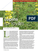 Lupins for layers