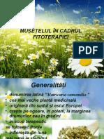 FITOTARAPIE- MUSETELUL