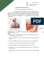 tugas anatomi fisiologi