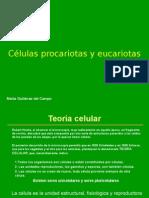 Tema 07 Celulas Procariotas y Eucariotas Marta