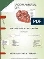 Circulacion Arterial y Venosa