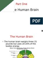 Part 1b Brains