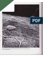 Alberts Cap 20 Celulas Germinales y Fecundacion