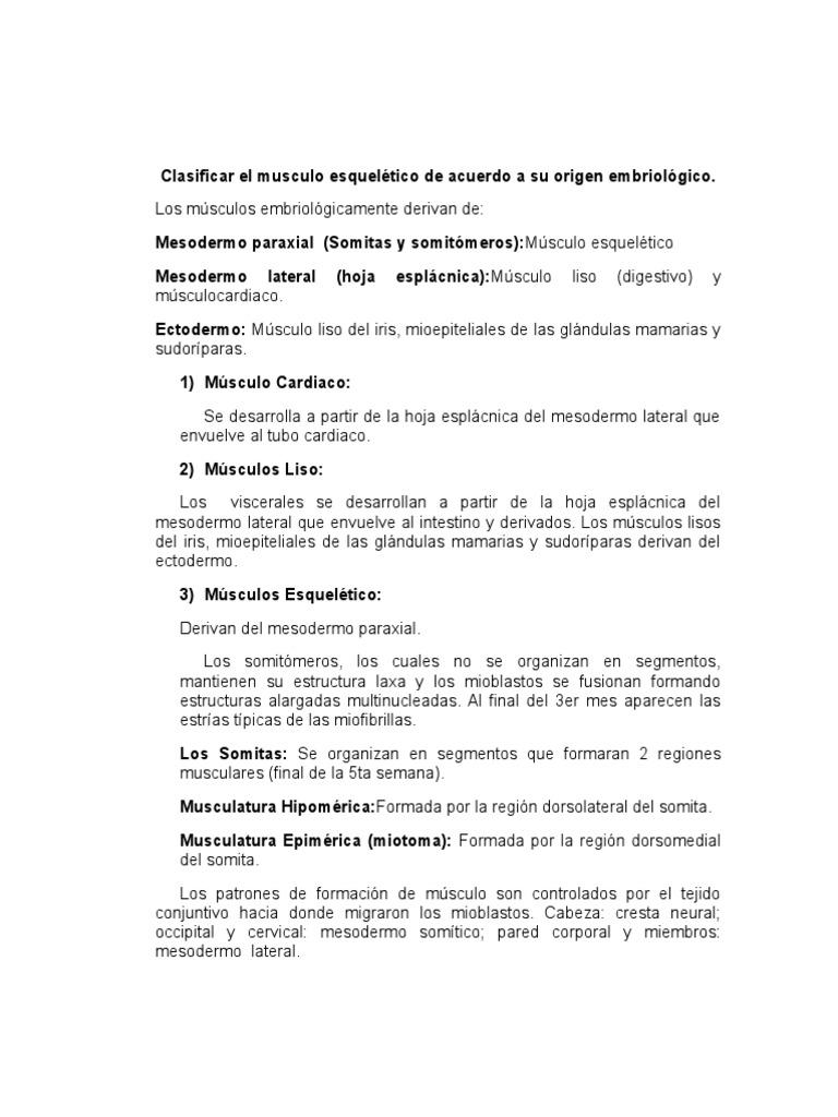 Excelente Hoja De Tejido Esquelético Foto - hojas de trabajo ...