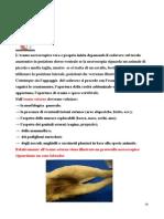 5_L_esame_esterno_del_cadavere_1_-morfologia,_malformazioni_scheletriche-