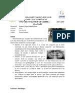 PIEZAS-DENTALES.docx
