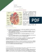 Fisiología Del Corazón 02