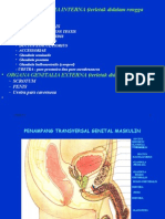 Organ Genital Pria (Dr. Nanda)