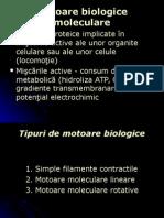 motoare biologice