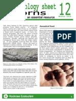 Rockrose-Ethnobiology Sheet 12 Acorns