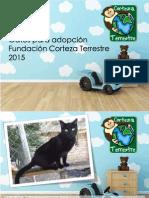 Gatos en Adopción Corteza Terrestre