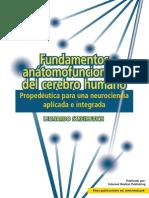 Fundamentos anátomofuncionales del cerebro humano. Propedéutica para una neurociencia aplicada e integrada