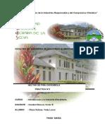 Informe Terminado Introduccion Practica 2