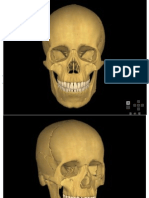 skull.pdf