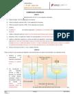 FT nº7 Fermentação e respiração - correção.doc