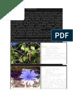 Las Plantas y Sus Propiedades