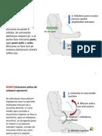 FNP-uri Pt. Mobilitate