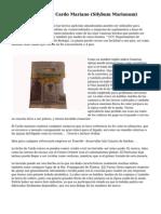 Usos Hist?ricos De Cardo Mariano (Silybum Marianum)