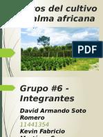 Efectos Del Cultivo de Palma Africana