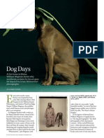 Profile of William Wegman