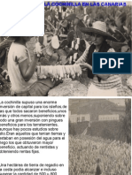 Explotación de La Cochinilla en Las Canarias Del Siglo Xix