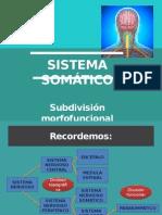 Sistema Somático