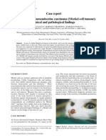 Feline Cutaneous Neuroendocrine Carcinoma (Merkel Cell Tumour)- Clinical and Pathological Findings (Pages 111–115)