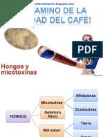 Micotoxinas-El Camino de La Calidad Del Cafe