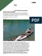 Projetos Extrativistas Em Florestas Fracassam, Aponta Banco Mundial