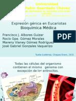 Expresión génica en Eucariotas