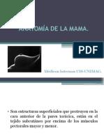 Anatomía de La Mama