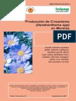 Cultivo del Crisantemo