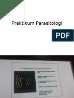 Praktikum Parasitologi.pptx