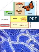 02 - Procariotas y Algas Calcáreas