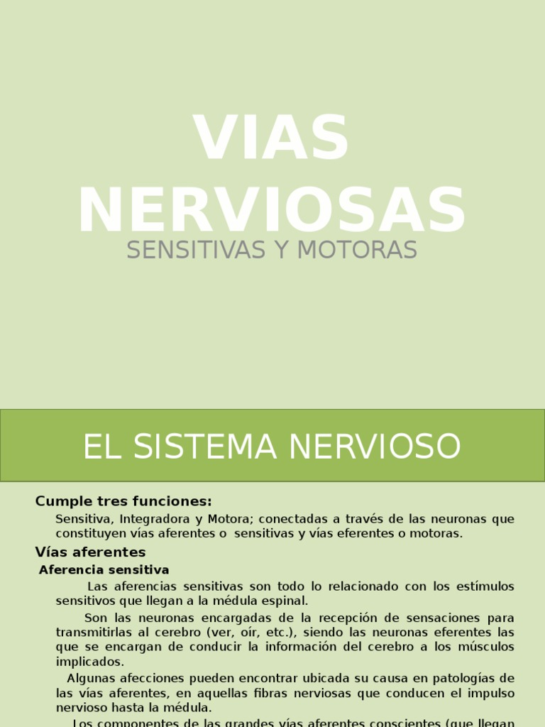 Vias Nerviosas